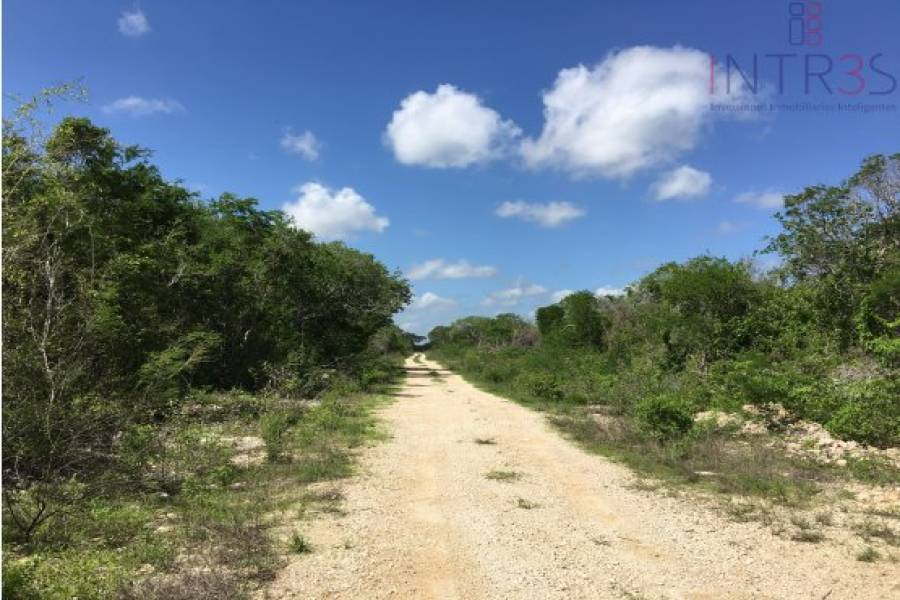 Mérida,Yucatán,México,Lotes-Terrenos,san ignacio,2947