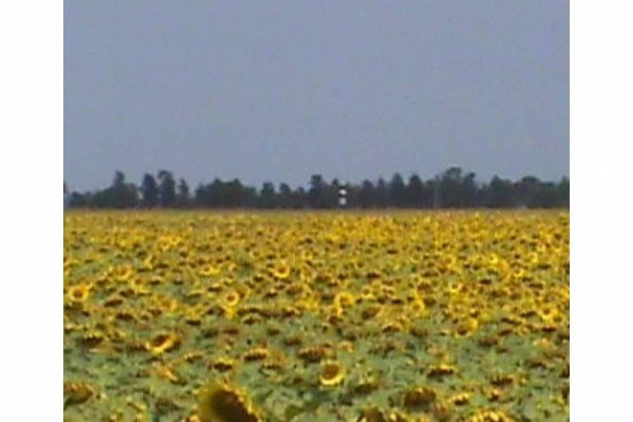 Pampa del Infierno,Chaco,Campos,Ruta 16,1505